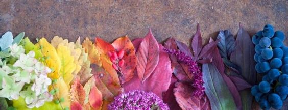 colorful fall Twitter header