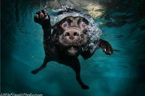 A dog underwater.