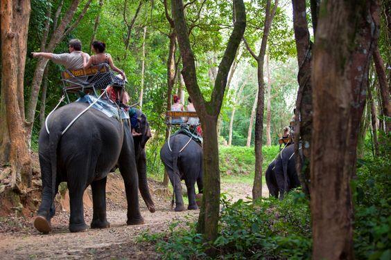 Siam Safari nature tours phuket #safari #tour #phuket #elephant #trekking #nature #ride #thingtodo #phukettrip #phukettour #thailand