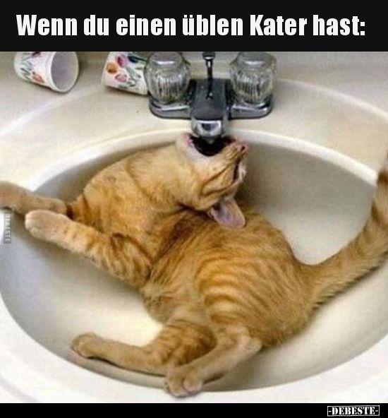 Wenn Du Einen Ublen Kater Hast Kittens Funny Funny Animals Cats And Kittens