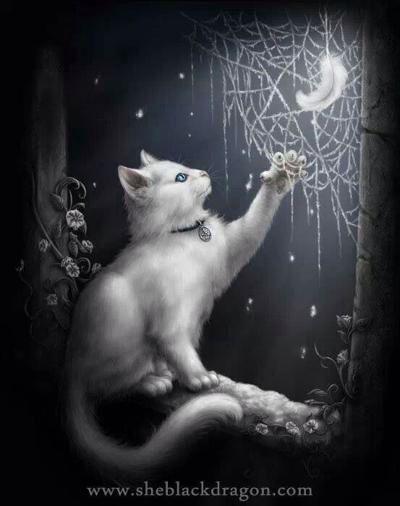 Moon~Kitty