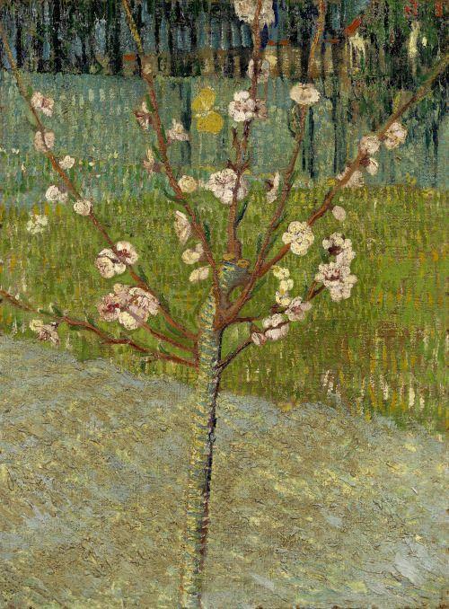 Vincent van GoghAlmond Tree in BlossomArles, April 1888oil on canvas, 50 cm x 37.5 cm Van Gogh Museum, Amsterdam (Vincent van Gogh Foundation)
