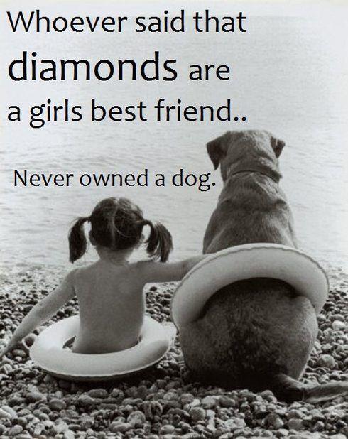 I want a dog!