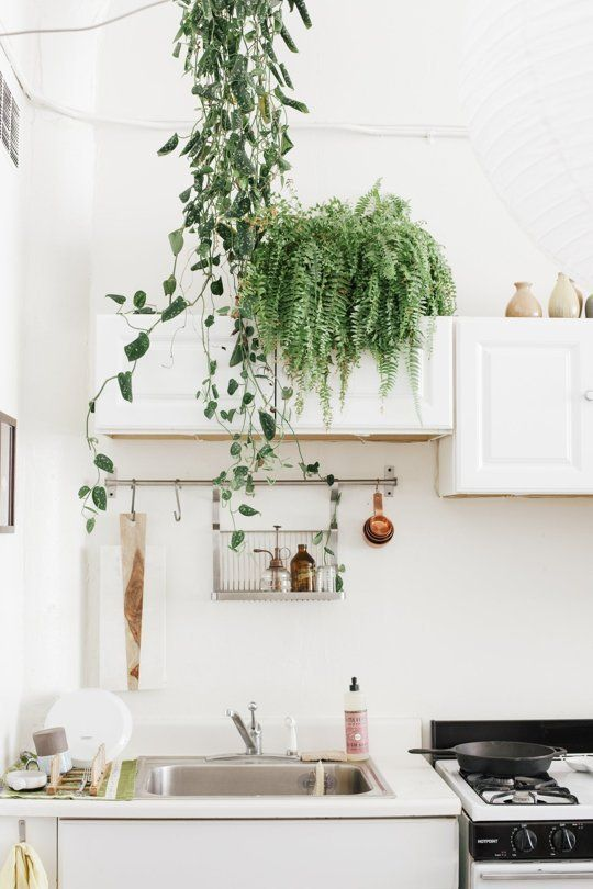 Greenery in the kitchen: