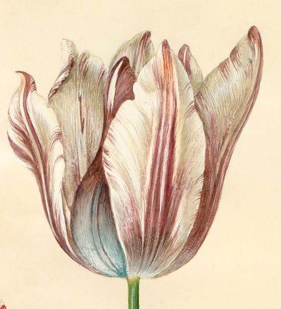 Tulipanes pintados con acuarela