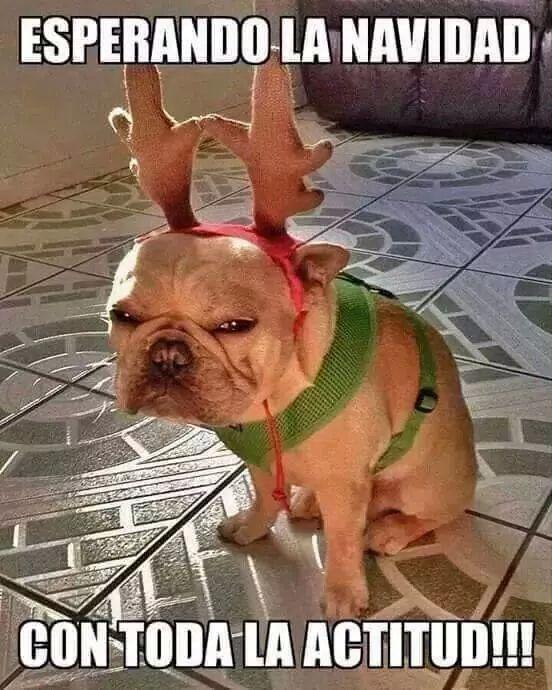 Navidad perrito meme risa grinch jjajaja