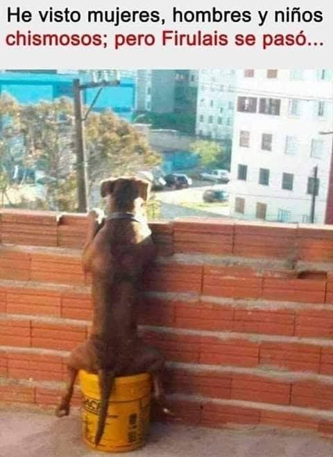 Un Perro Muy Observador Memes Divertidos Memes Graciosos Memes Comicos