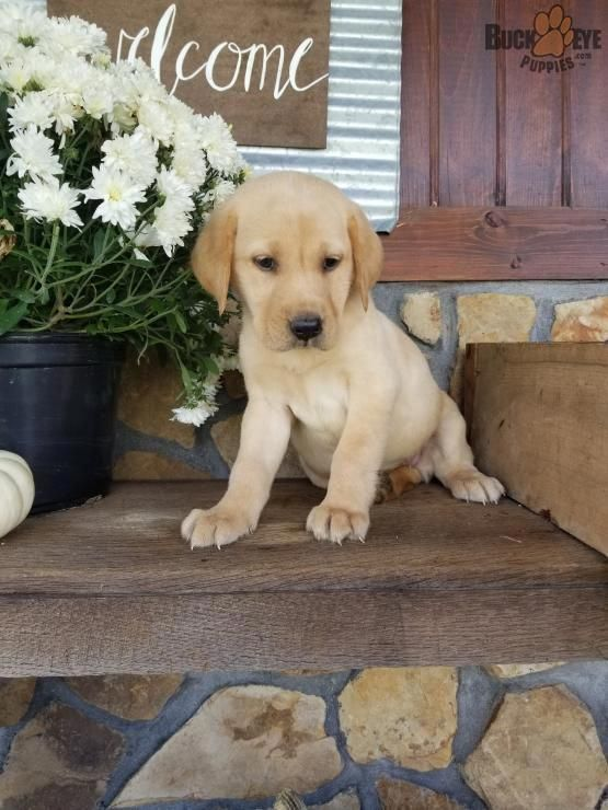Find Out Even More Details On Labradors Browse Through Our Web