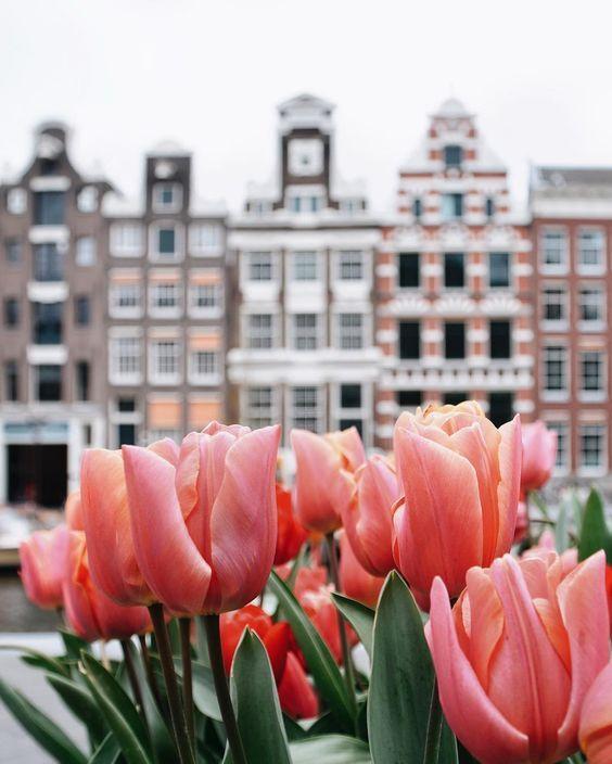 Belgium Views Viva Travels Amsterdam Photography Tulip Season