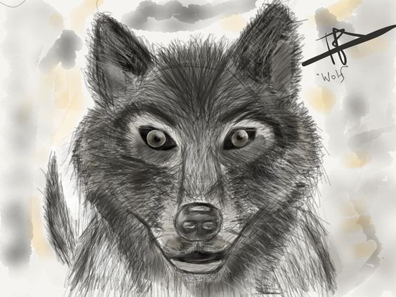Wolf Digital 20481536 http://ift.tt/23RpkrP