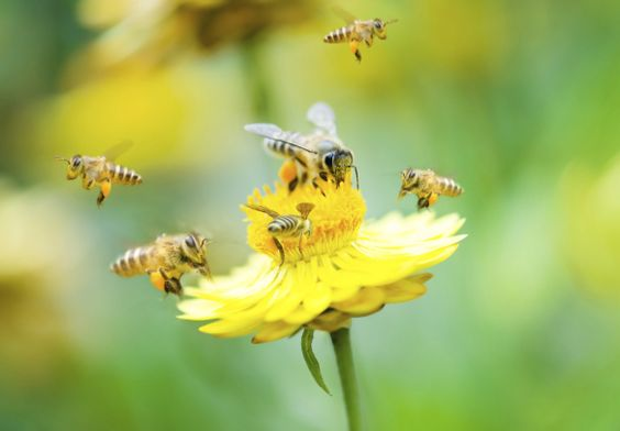 what's the buzz on bees… attracting nature