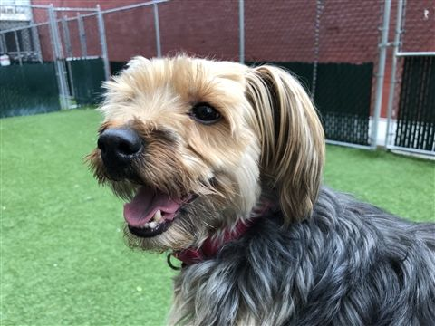 Safe 2 29 20 Frankie Is At Risk Of Euthanasia And Needs Placement Please Consider Opening Your Home Today Hello My N In 2020 Brown Dog Frankie Animals