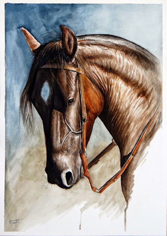 Cabeça Cavalo Aquarela