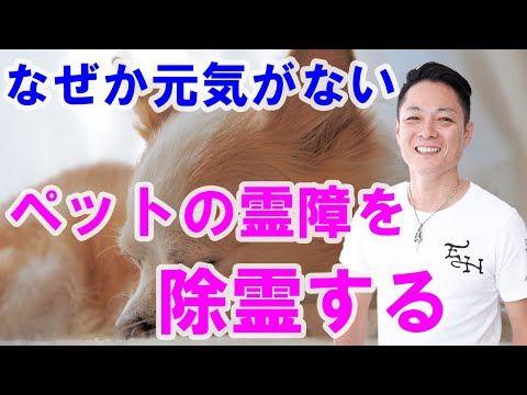 動画を流すだけ ペットの霊障を除霊する プロ霊能力者のガチ除霊 Youtube サブリミナル 運気 運気アップ