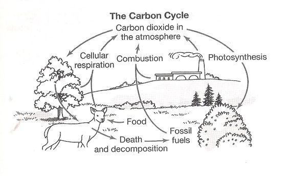 blank nitrogen cycle diagram water environmental science. Black Bedroom Furniture Sets. Home Design Ideas