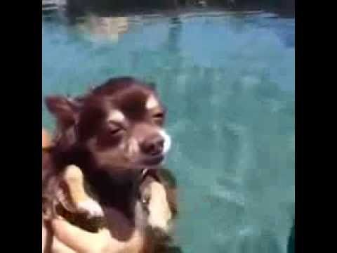 ▶ Cachorro de boa na piscina || GFM - YouTube #funny #cute #dogs