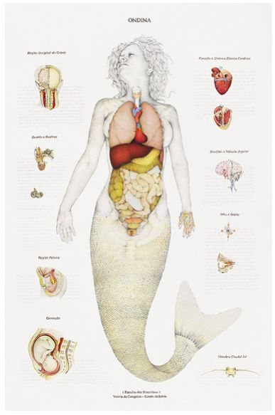 Conceptual artist Walmor Corrêa is known for his artwork showing the anatomy of all kinds of mythical creatures.