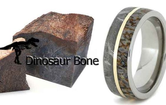 Dinosaur Bone Collection
