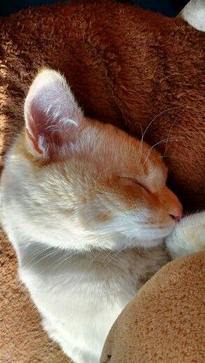 Django disfrutando de una siesta