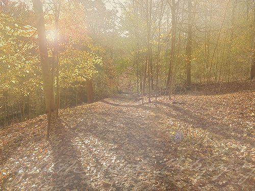 November Woods photograph