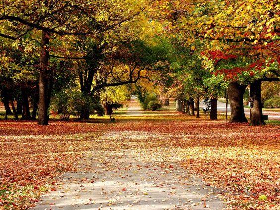 Fotos Imagem Natureza - Imagens Imagem Natureza - ClickGrátis