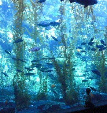 Aquarium Birches And San Diego On Pinterest