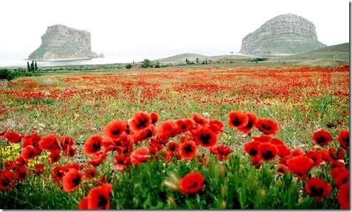 belezas do ira flores,iran