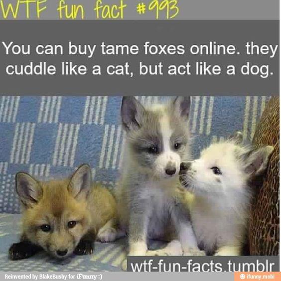 Well.... I'm getting one!! Lol I WANT ONE!!!!!!!!!!!!!!!!!!!!!!!!!!!!!!!!!!!