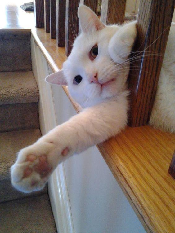 Cat on the rails: