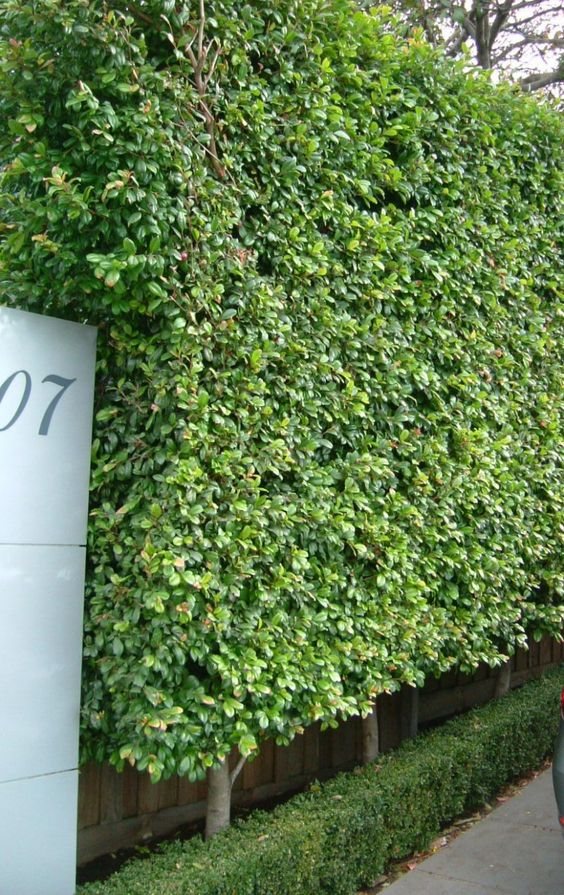 This made me think of my hedge outside where I stay. I thought i could use it in my research somehow.