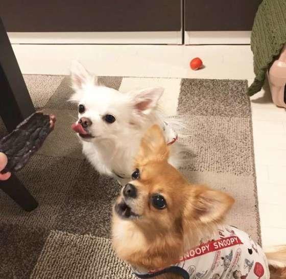 犬にもやしをあげても大丈夫 犬への健康効果と与えるときの注意点 いぬのきもちweb Magazine 犬 いぬ 動物