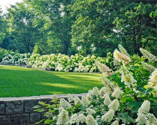 Traditional Spaces Hydrangea Hedge Design Pictures