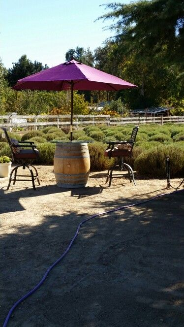 Pretty little spot for a snack or refreshment while visiting us.