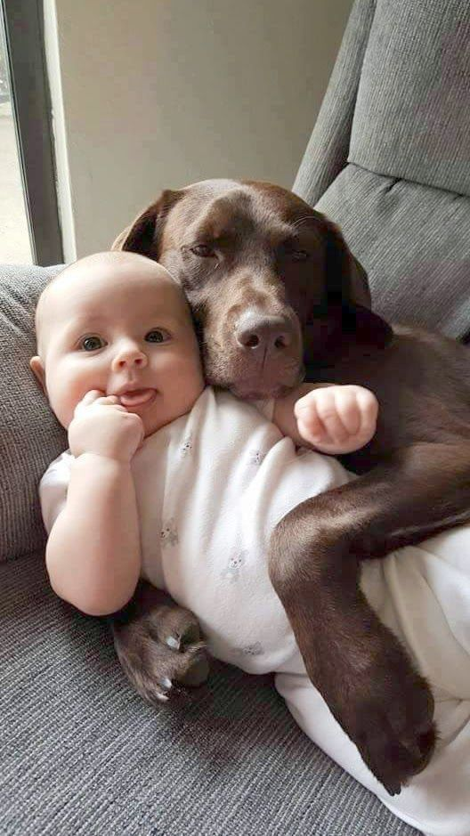 Baby Dogs Breeds Upon For