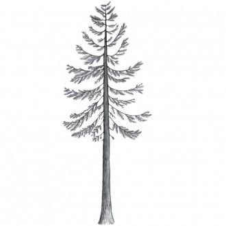 tree decal (for Abs room)