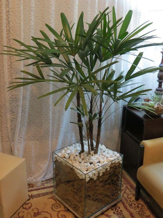 Plantas ideais para ambientes internos. Palmeira Ráfis (Rhapis excelsa): em vasos atinge altura máxima de 2 m, a terra deve ser úmida. Cresce bem em pouca luminosidade.: