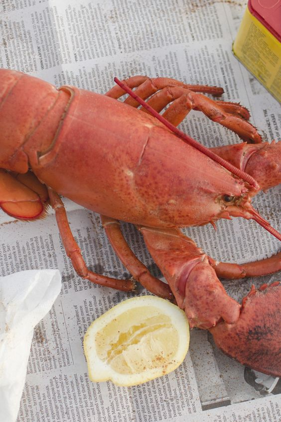 Lobster Prices Surge Due To Cold Ocean Temperatures