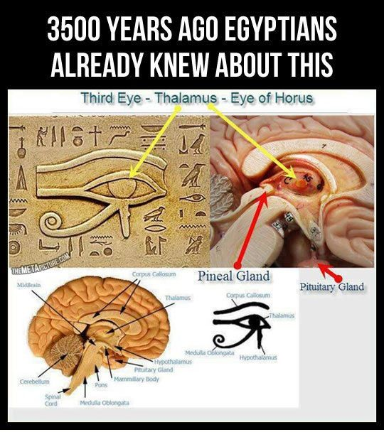 Third eye ... yep isn't interesting what fluoride in the water supply does to the pineal gland? Think that's an accident?: