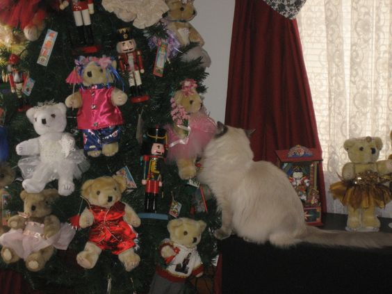 Lucy ! Leave the Tedyy Bears alone!