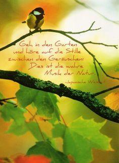 Geh in den Garten der Stille... #Weisheiten #Zitate