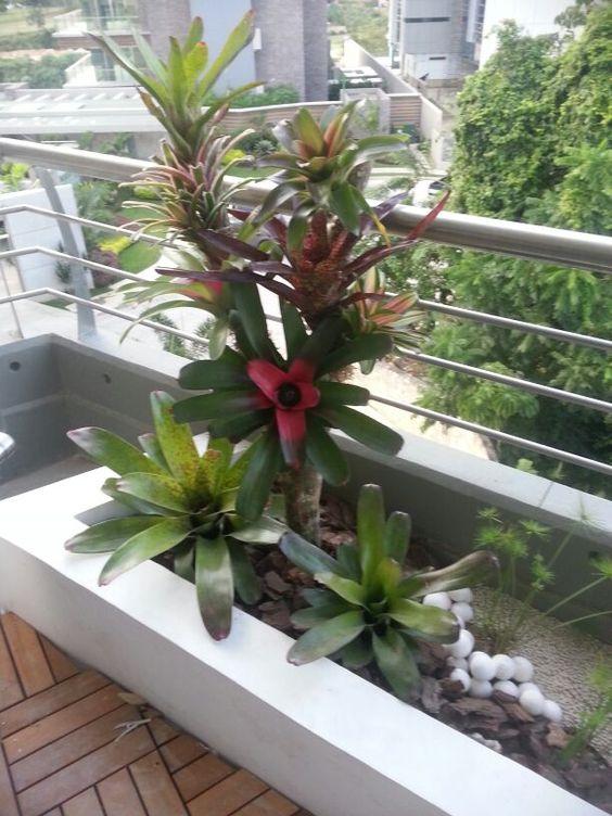 Jardineras con bromelias de sol pua paisajismo creativo for Plantas paisajismo
