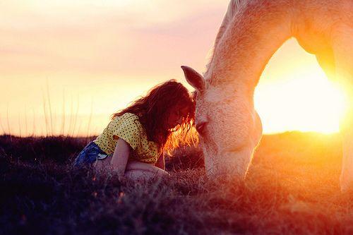 horse sun flare