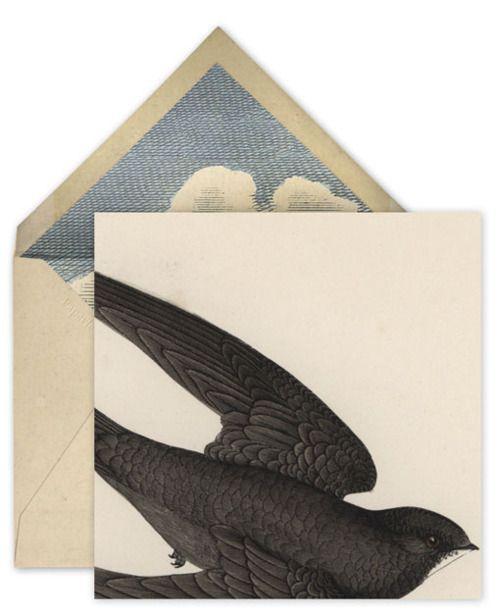 Swift by John Derian