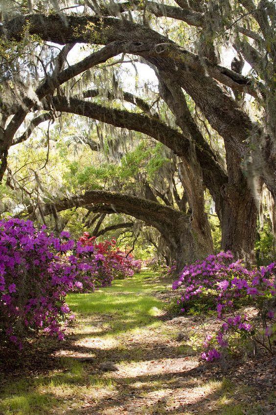 Gardens Charleston Sc And Passport On Pinterest