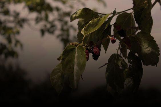 fruto prohibido