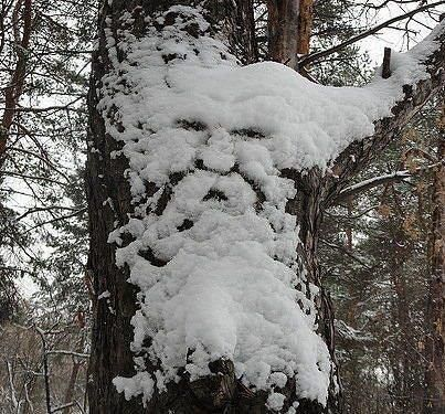 Who says Nature does not have a sense of humor?---Old Man #Winter http://www.roanokemyhomesweethome.com/: