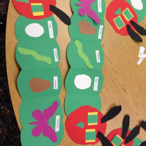 In this craft, kids arranged the stages of a caterpillar's life into a foldable book shaped like the bug.:
