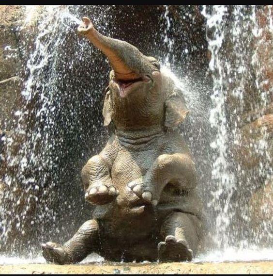 Bebe elefante sonriendo