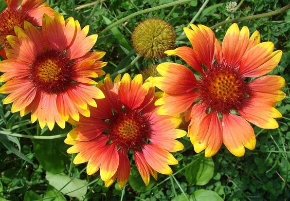 TOP 10 PERENNIALS FOR DRY AND DUSTY GARDENS - http://www.gardenpicsandtips.com/top-10-perennials-for-dry-and-dusty-gardens/