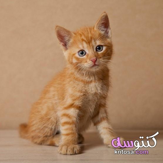أجمل الصور قطط صغيرة قطط روعة اجمل قطة في الكون قطط جميلة بيضاء Cats Animals